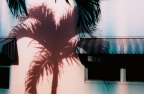 Palm-Neon_98_1080